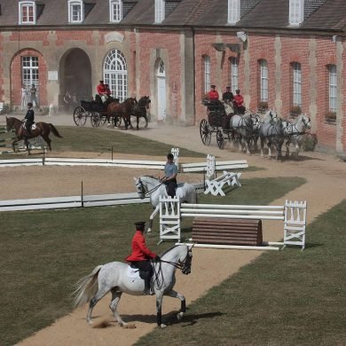 Thursdays at the Haras du Pin National Stud