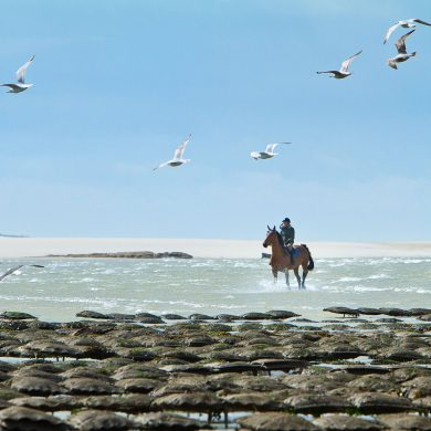Emblematic horse-riding trails in Normandy