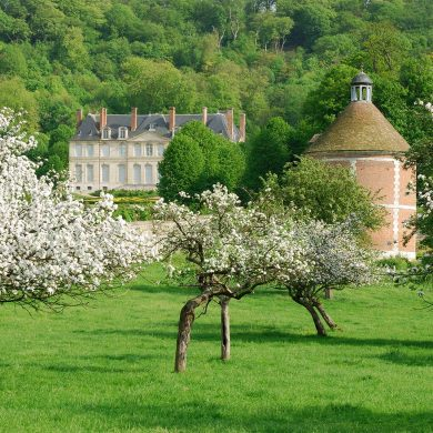 Apple and pear trees in blossom