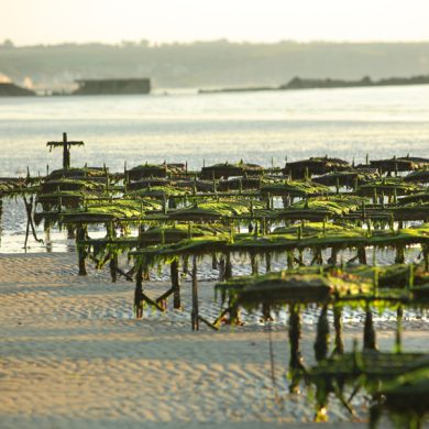 Seulles Terre et Mer intercommunal Tourist Office – Asnelles Office
