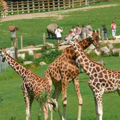 Cerza Zoo